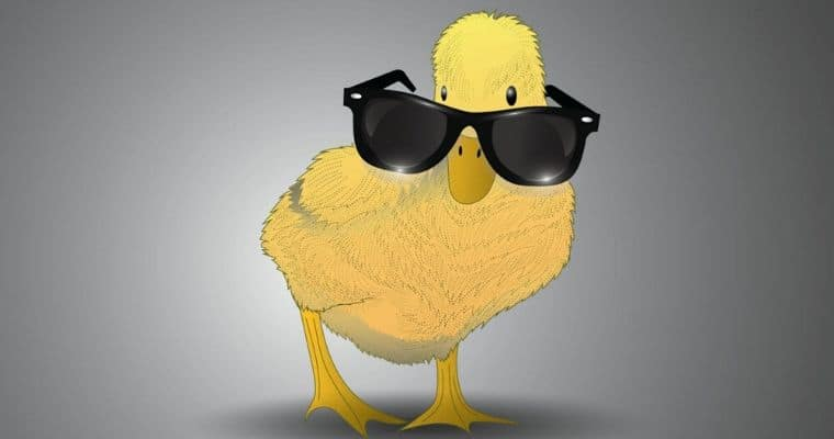 duck wearing sunglasses